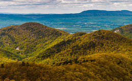 Den tidiga våren färgar i den blåa Ridge Mountains i den Shenandoah nationalparken, Virginia. royaltyfria bilder