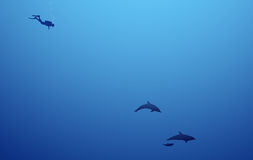 In den Tiefen des Meeres Stockfoto