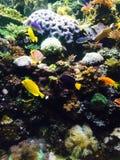 In den tiefen Fischen Stockfotos