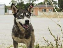 Den tillfälliga hunden i det djura skyddet parkerar royaltyfria bilder