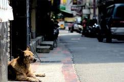 Den tillfälliga hunden i Taiwan sover på gatan i Taipei, Taiwan Taiwan ` s är tropisk och snöar huruvida inte mycket under vinter royaltyfri bild