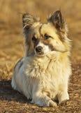 Den tillfälliga hunden, metis ligger på jorden royaltyfria bilder