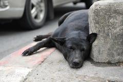 Den tillfälliga hunden vilar på en stadsgata Royaltyfri Fotografi