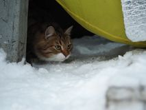 Den tillfälliga katten önskar att spela för fotografering för bildbyråer