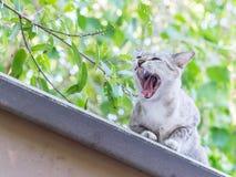 Den tillfälliga katten gäspar på taket Arkivbild
