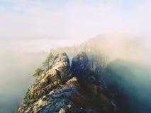 Den tjocka dimman är svängande vaggar between, och remsan över höga träd i felik gryning för prydlig skog i tyst vaggar Royaltyfri Fotografi