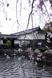 Den Tokyo slotten med Cherry Blossoms arkivbilder