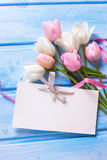 Den tomma etiketten, vit och rosa färger fjädrar tulpan, rosa band på blått w Arkivbild