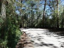 Den tomma vägen med sörjer träd fotografering för bildbyråer