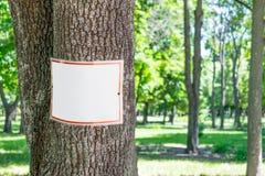 Den tomma vita plattan på träd i gräsplan parkerar bakgrund Fyrkantig signb royaltyfria foton