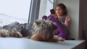 Den tonåriga flickan spela direktanslutet leken för smartphone och älsklings- hund sover sammanträderengöringsduk på fönsterfönst lager videofilmer
