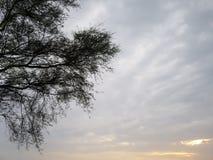 Den toppna sommarsolnedgången sceen Royaltyfri Foto