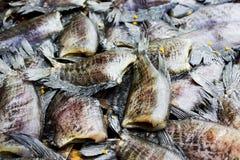 Den torkade fisken texturerar Royaltyfria Foton