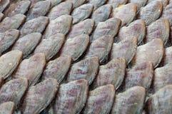 Den torkade gouramien fiskar till salu i marknaden royaltyfri foto