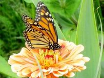 Den Toronto höjdpunkten parkerar monark- och blommaståndare 2015 royaltyfri bild