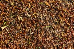 Den torra leafen texturerar Fotografering för Bildbyråer