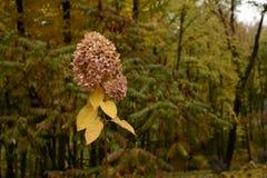 Den torra och frodiga blomman är ett symbol av hösten arkivbild