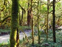 Den torra skogen av buxbom som täckas med mossa, träden, stammarna av träd royaltyfria bilder