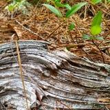Den torra trädfilialen texturerar linjer fractals som trädet sörjer Royaltyfri Fotografi