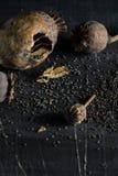 Den torra vallmon boxas Fotografering för Bildbyråer