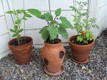 den trädgårds- bilden planterar materielet Arkivbild