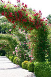 den trädgårds- ligganden steg royaltyfri bild