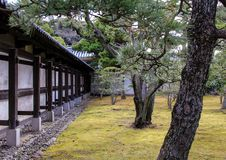 Den trädgårds- Ninomaruen gränsa till varandra den Ninomaru slotten Royaltyfri Foto