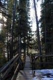 Den trägå banan Piskew faller, nordliga Manitoba nära Thompson royaltyfria foton