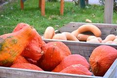 Den trävagnen för bonde` s fyllde med orange pumpor och kalebasser Arkivfoton