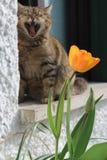 Den trötta katten Arkivfoton