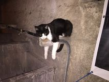 den tröttade katten Royaltyfri Foto