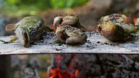 Den traditionella bakade fisken på en säng av saltar i Donaudelta stock video