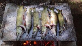 Den traditionella bakade fisken på en säng av saltar i Donaudelta lager videofilmer