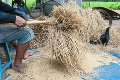 Den traditionella vägen av att tröska korn i nordost av Thailand arkivbilder