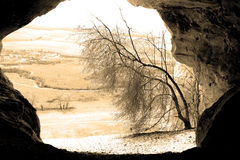 Tree i en grotta Royaltyfria Foton
