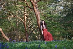 Den trendiga damen lutar mot ett träd i en engelsk skogsmark i tidig vår, med blåklockor i förgrunden arkivbilder