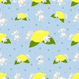 Den trevliga sömlösa modellen med citronen och citronen blommar på blå bakgrund Royaltyfri Foto