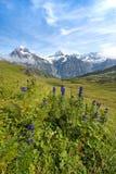 Den trevliga sikten med blått blommar på en bakgrund av berg schweizare Royaltyfri Bild