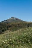 Den trevliga sikten på ett berg med något blommar i förgrunden Royaltyfria Foton