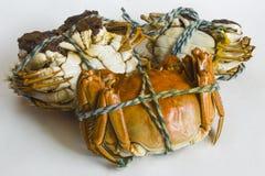 Den trevligt ordnade läckra krabban Arkivbilder