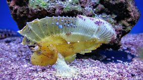 Den tropiska fisken i a tankar Royaltyfri Bild