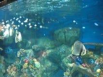 Den tropiska fisken inom en behållare i oceanariumen, det Manila havet parkerar, Manila royaltyfri fotografi