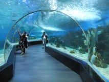 Den tropiska fisken inom en beh?llare i oceanariumen, det Manila havet parkerar, Manila royaltyfria bilder
