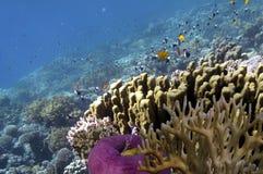 Den tropiska fisken och koraller som visar olika färgrika fiskar, simmar Arkivbild