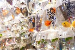 Den tropiska fisken som hänger i plastpåsar på Tung Choi Street, går royaltyfri foto