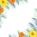 Den tropiska mallen för designgränsramen med gröna djungelpalmträdsidor och exotiska apelsin- och gulinghibiskusblommor kopplar i vektor illustrationer