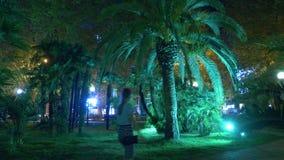 Den tropiska natten parkerar med palmträd i semesterortstaden med nattbelysning 4K lager videofilmer