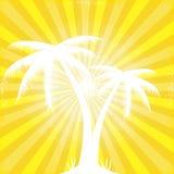 Den tropiska orange soliga strålen strålar silhouetted trees. Fotografering för Bildbyråer