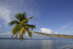 Den tropiska paradisökokosnöten gömma i handflatan Arkivfoton