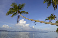 Den tropiska paradisökokosnöten gömma i handflatan Royaltyfria Bilder